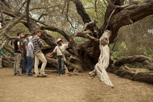 El turismo rural comunitario es una de las opciones en el Santuario Histórico Bosque de Pómac.