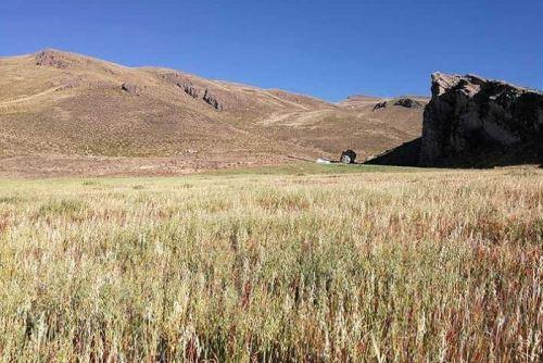 Este año se sembrarán más de 100,000 hectáreas de pastos cultivables.