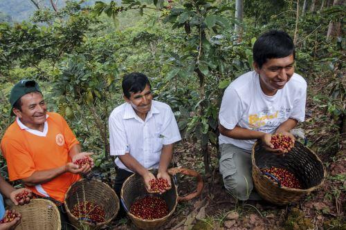 Se reivindica la participación de las familias en la cadena productiva del café.