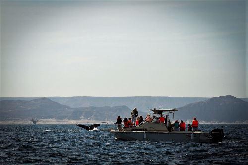 El avistamiento de ballenas es un espectáculo único en el mar del norte peruano.