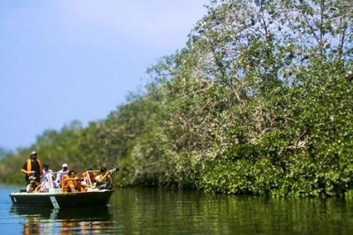 Los manglares de Tumbes formarán parte de investigación científica que se concretará con apoyo de National Geographic Society.