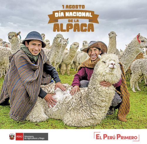 Perú celebra el Día Nacional de la Alpaca.