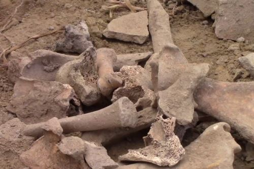 Personal especializado halló restos óseos humanos cerca de Wariwillka.