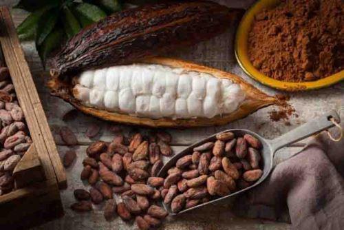 Las familias productoras de cacao se beneficiarán con estas acciones.