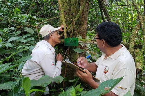 Guardaparques del Sernanp y voluntarios descubrieron la nueva variedad de orquídea.