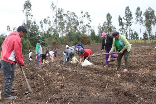 El uso del guano de las islas mejora la calidad de los productos agrícolas.
