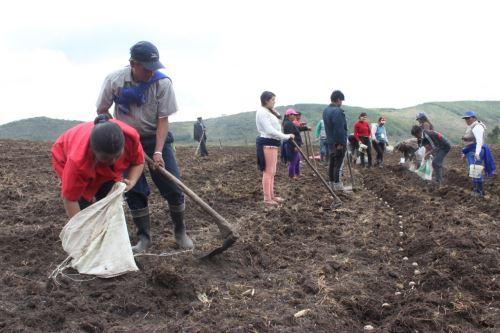 Minagri impulsa uso del guano de la isla en los pequeños agricultores.