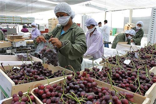 La uva es uno de los productos con mayor potencial exportador de Áncash.