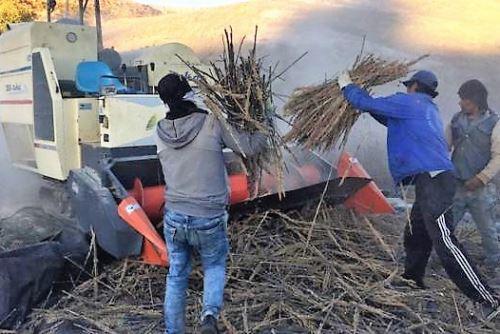 Otros países buscan también competir con el cultivo de la quinua.