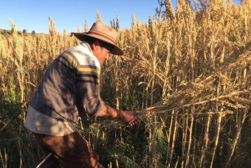 Rodrigo Cisneros es uno de los agricultores beneficiados con el boom de la quinua. Foto: BBC Mundo