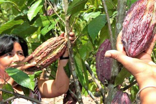 El plan contempla articular 13 planes de negocios de cacao.