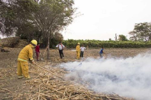 Autoridades investigan si incendio forestal en Santuario de Pómac fue provocado.