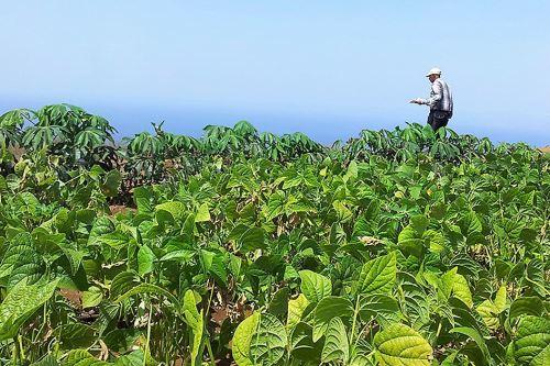 La tecnología permite identificar el potencial agrícola de la región San Martín.