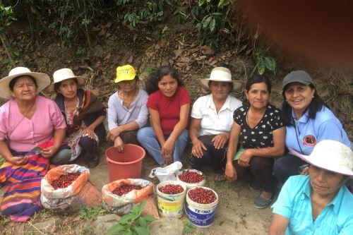 PNUD destaca que en la producción de café trabajan más de 220,000 familias.