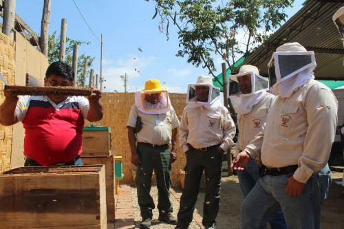 Los visitantes aprenderán a elaborar productos derivados del Santuario Histórico Bosque de Pómac, como la miel de abeja.