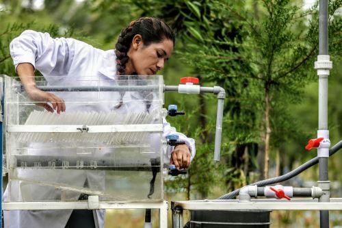 La planta de tratamiento de agua inventada por Nazia Loayza disminuye los niveles de turbiedad.