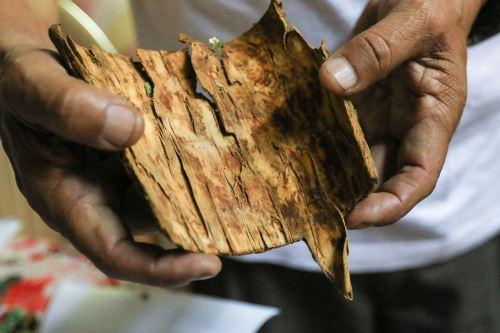 Los pueblos precolombinos de Perú fueron los primeros en usar la corteza de la quina para aliviar enfermedades.