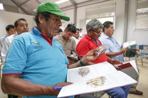 Productores de castaña fueron capacitados para dotar de mayor calidad al fruto.