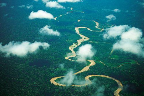 La Semana Forestal Nacional resaltará importancia de proteger y preservar nuestros bosques.