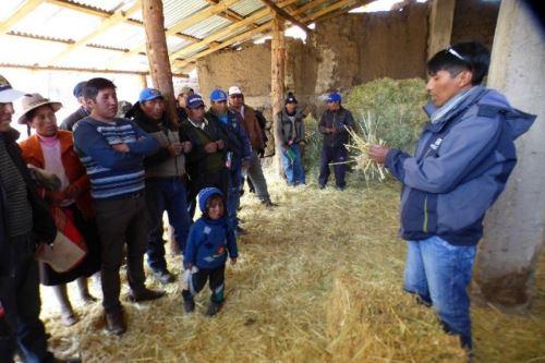 La asistencia técnica permitirá a los productores alpaqueros enfrentar en mejores condiciones la inclemencia de la naturaleza.