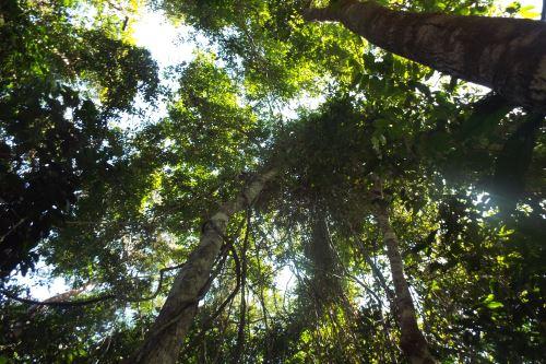 El Perú contará con una herramienta de planificación para mejorar la gestión sostenible de los recursos forestales y de fauna silvestre.