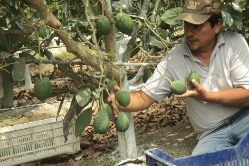 Los asistentes técnicos replicarán sus conocimientos a más de 1,200 pequeños agricultores.