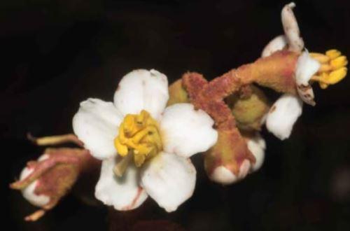 El hallazgo estuvo a cargo de investigadores del Jardín Botánico de Nueva York y de Brasil.