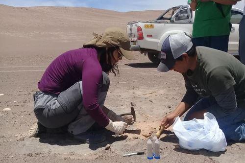 La máster en Ciencia Thays Bentes llegó desde Brasil para estudiar el Mar de Cuarzo del desierto arequipeño de La Joya.