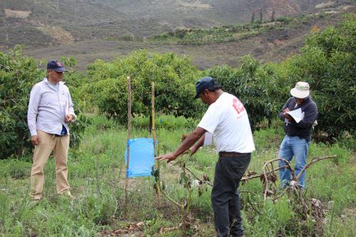 Los productores de palta fueron capacitados por especialistas de Agro Rural.