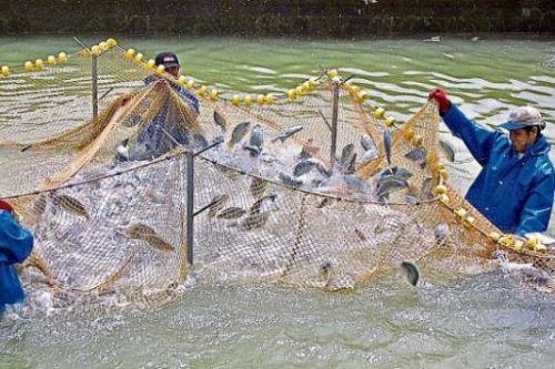 La capacitación de pescadores artesanales se hace con apoyo de empresas mineras.