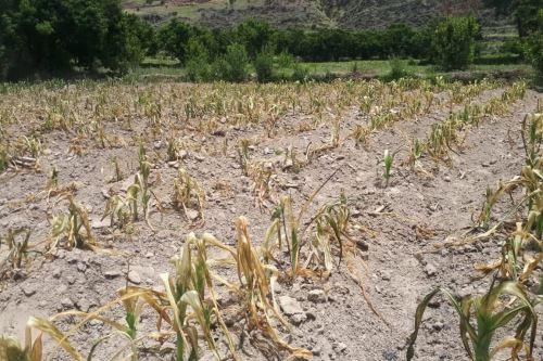Desde el 1 de diciembre se registra una ausencia de lluvias que afecta a la agricultura.