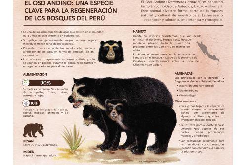 Cría de oso de anteojos resctada en Huancayo fue entregada en custodia al zoológico del Colegio Inmaculada en Lima.