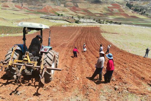 Productores de Huancavelica se capacitan para incrementar calidad y rentabilidad de producción de quinua.