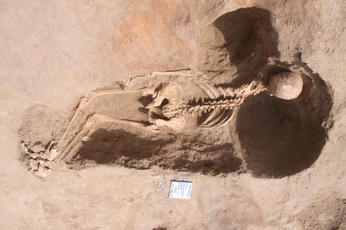 Tumba con un posible sacrificado fue descubierta en la huaca Santa Rosa de Pucalá, en la región Lambayeque.