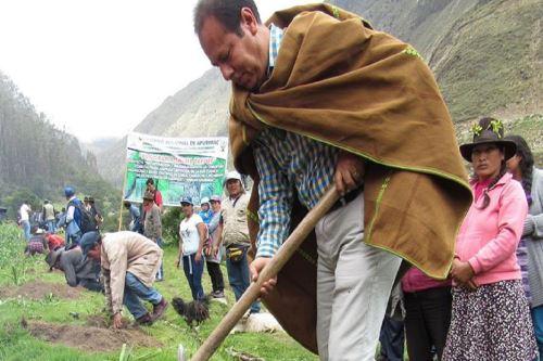 El Gobierno Regional de Apurímac impulsó el programa de reforestación Sacha Tarpuy, para mejorar las condiciones económicas y sociales de la población de manera sostenible.