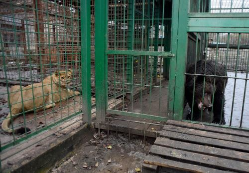 Leona y osos pardos del refugio
