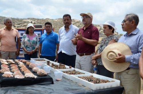 Director de la Unidad Ejecutora Naylamp, Alfredo Narváez, presentó los vestigios hallados en Cerro Blanco.