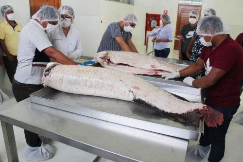 Pescadores de Pacaya Samiria aprendieron sobre la composición química de la carne, técnicas de procesamiento, cortes en filete, entre otros aspectos.