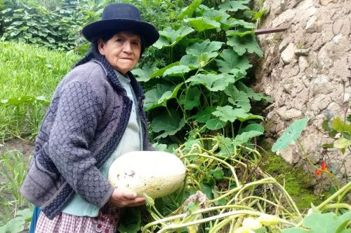 Eugenia Belito, natural de Huancavelica, emprende un negocio de plantas ornamentales.