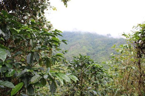 El corredor binacional conecta ecosistemas que cuentan con condiciones ideales para proteger la fauna silvestre.