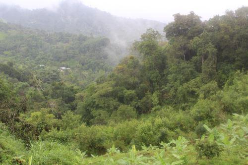 El corredor protege bosques montanos y páramos.