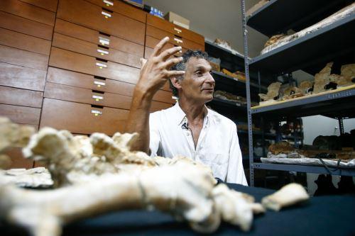 El investigador y colector colector del Museo de Historia Natural, Mario Urbina, contó que en 2007 vio por primera vez una falange de la ballena de cuatro patas.