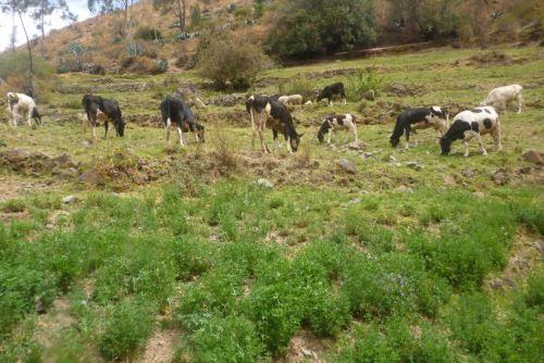El Minagri recomienda producción de heno y pastoreo rotativo como preparación ante heladas para asegurar alimento de ganado.
