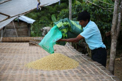 La familia Mamani Phocco trabaja celosamente para garantizar el cultivo orgánico de café.