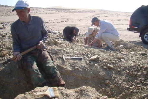 El investigador y colector del Museo de Historia Natural, Mario Urbina, aseguró que mientras busque huesos no se aburre.