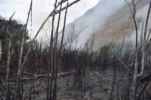 La Municipalidad Distrital de Buenavista Alta (Casma) constató daños ocasionados por incendio forestal en el sector de Tucushuanca.