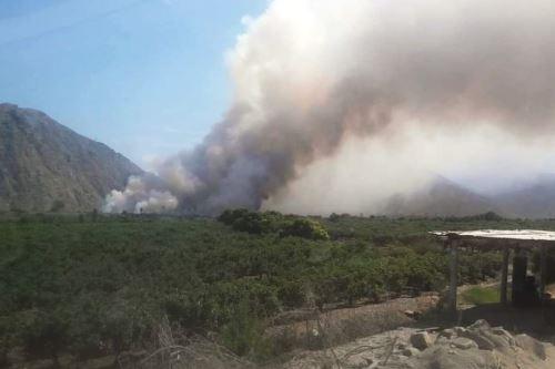 El secretario técnico de Defensa Civil de Buenavista Alta, Gustavo Reyes Silva, señaló que el fuego habría sido provocado.