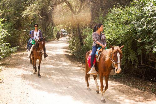 El Santuario Histórico Bosque de Pómac se ubica en el distrito de Pítipo, provincia lambayecana de Ferreñafe; preserva la más densa formación de algarrobos del planeta.