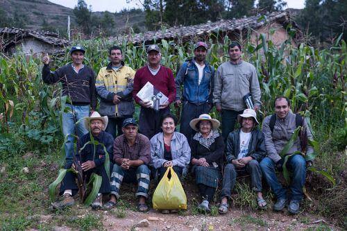 Productores de maíz morado se beneficiarán con esta variedad que tiene un mayor rendimiento productivo.