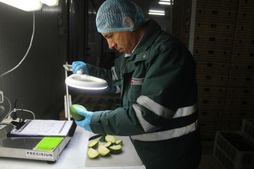 Las mesas de Holanda, Estados Unidos, España y Chile disfrutan de la palta certificada de Arequipa.